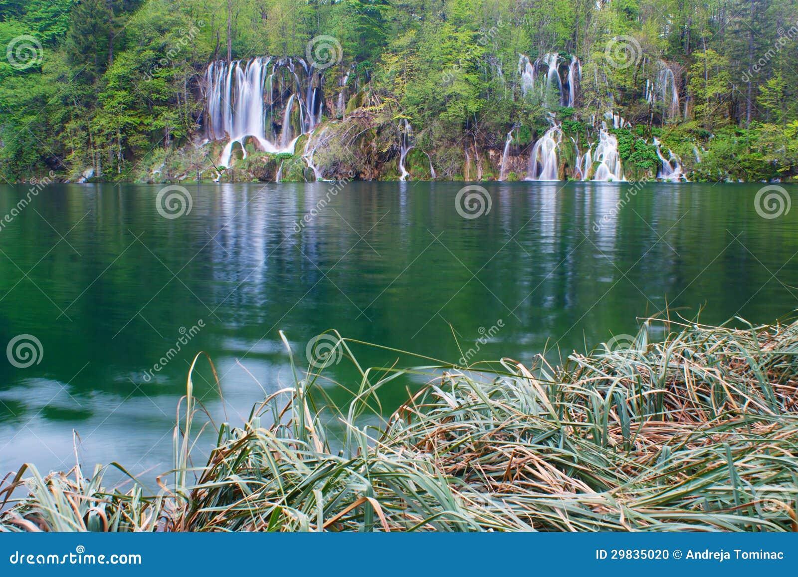 Floresta, juncos, lago, e cachoeiras na mola