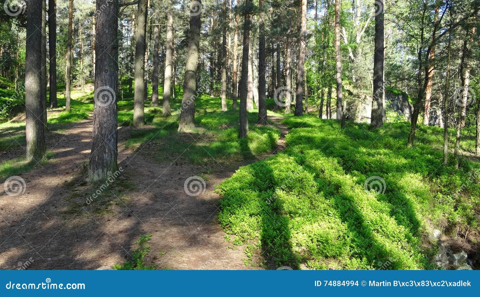 Floresta na primavera