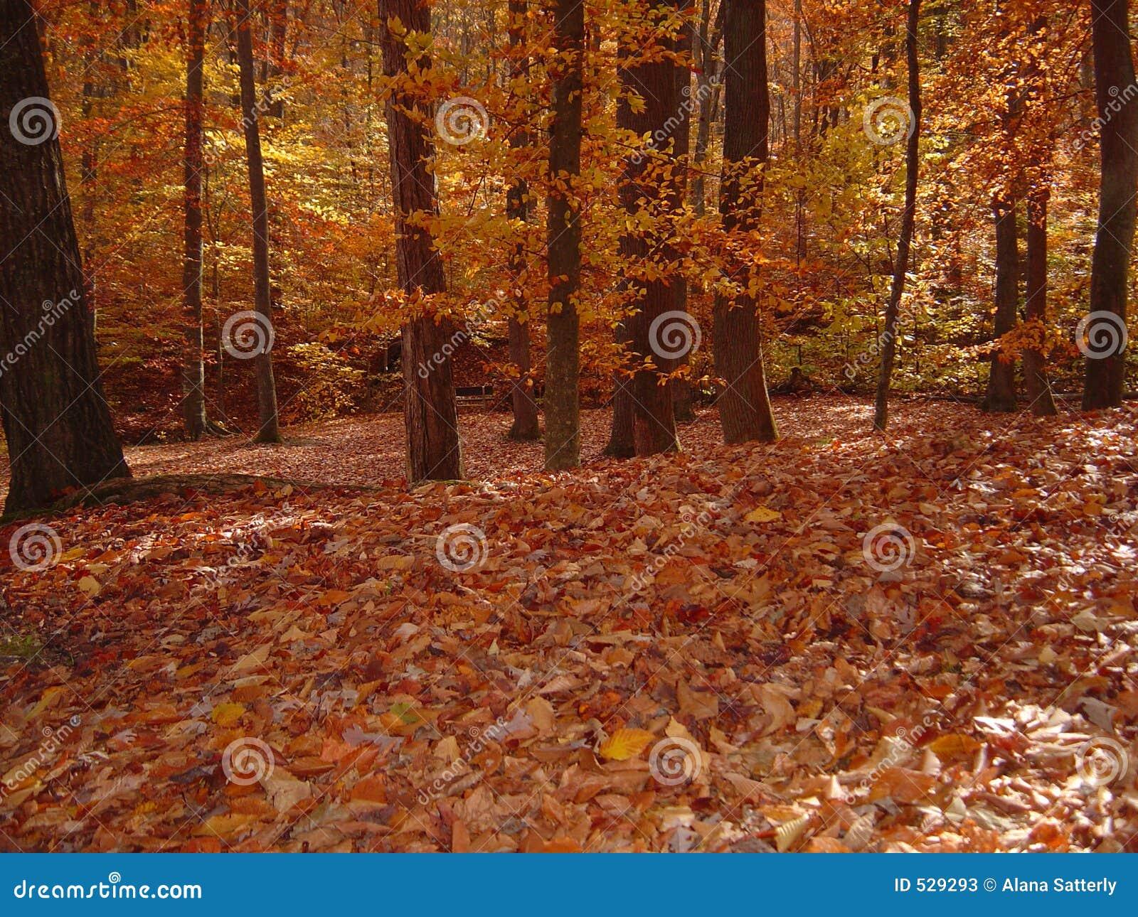 Floresta na queda