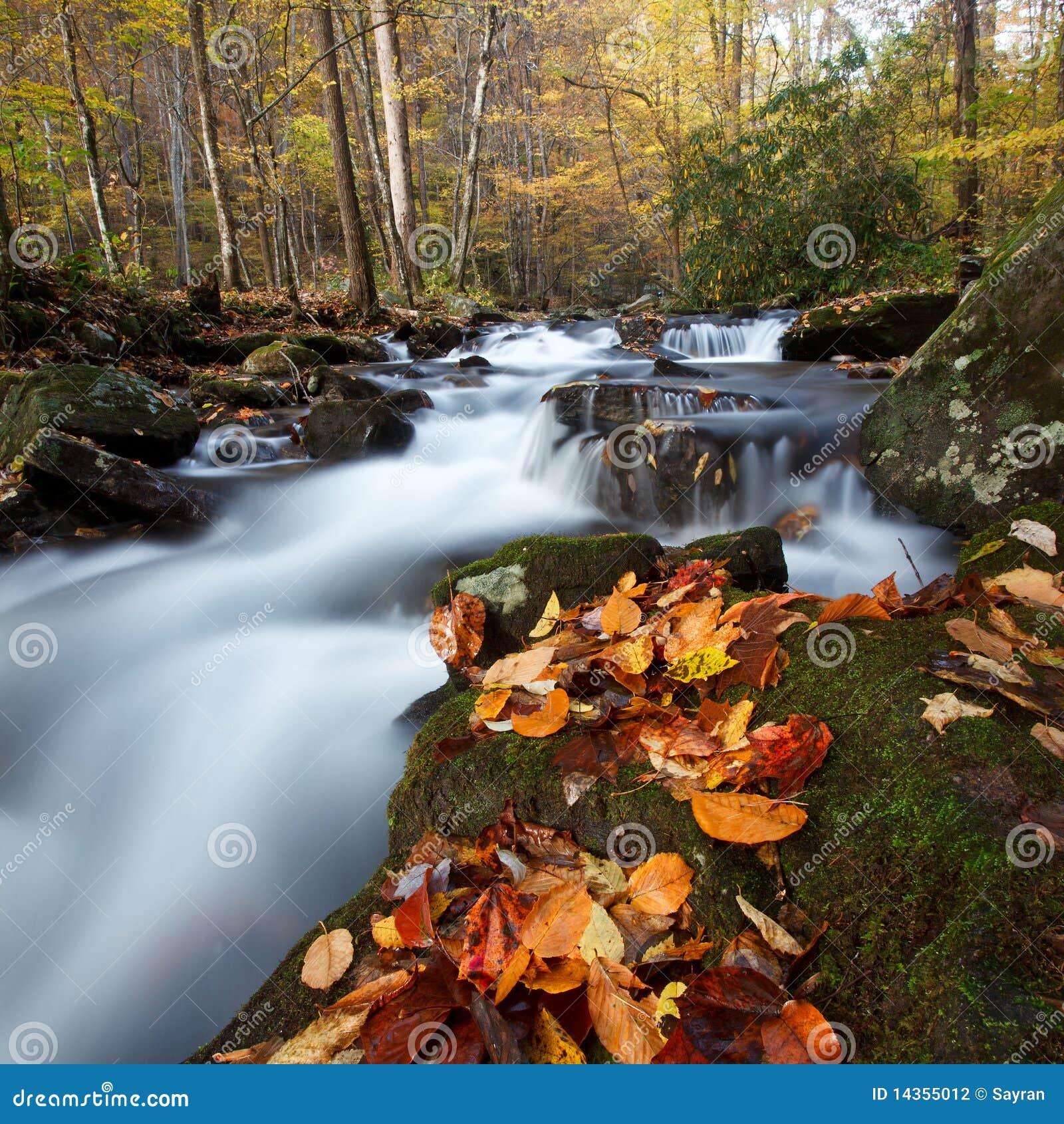 Floresta nacional de Chattahoochee