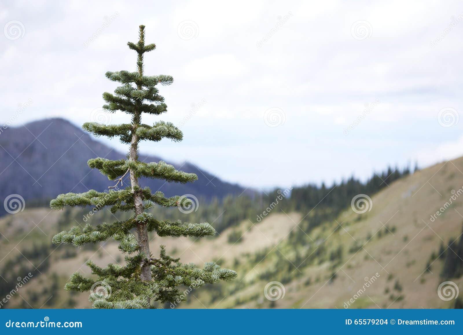 Floresta nacional olímpica, Washington