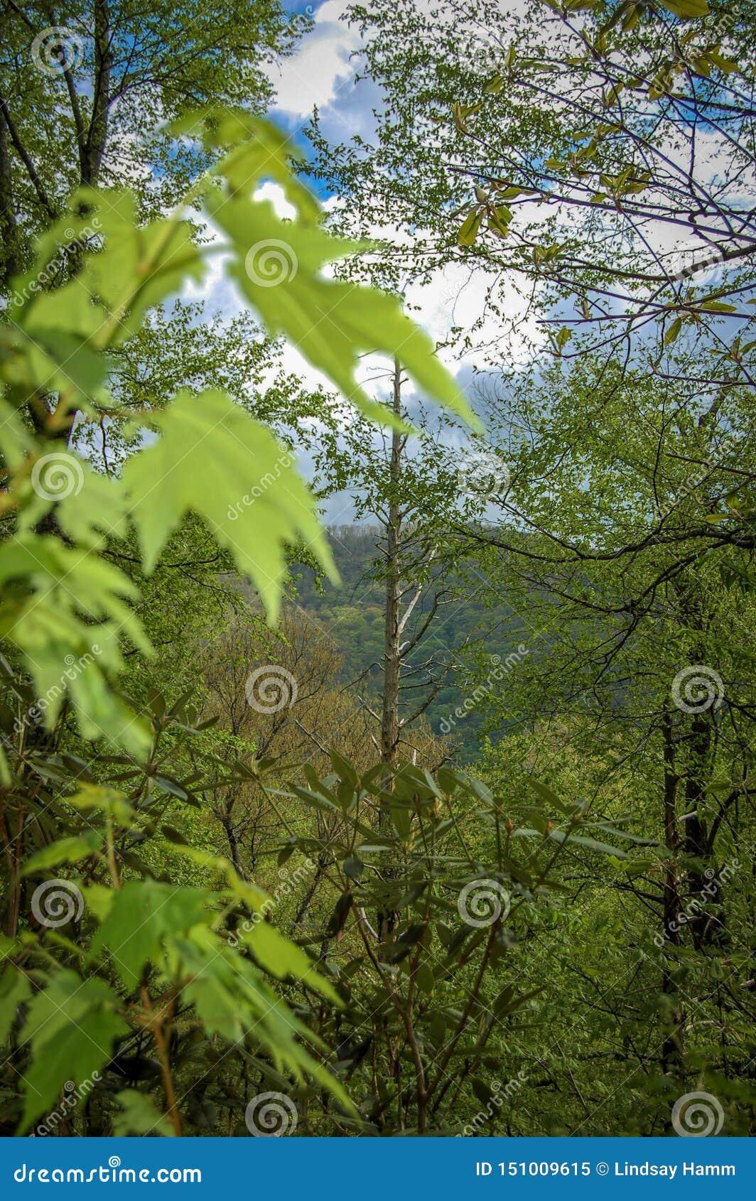 Floresta nas montanhas