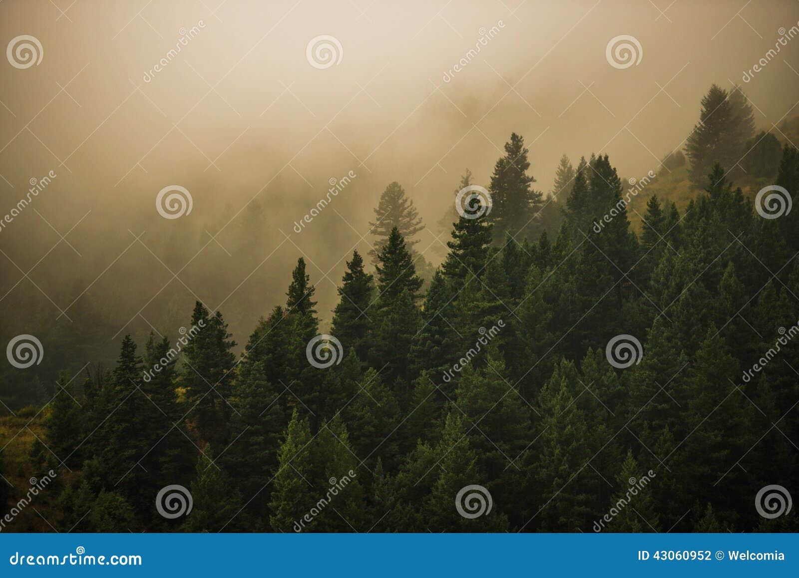 Floresta nevoenta de Colorado