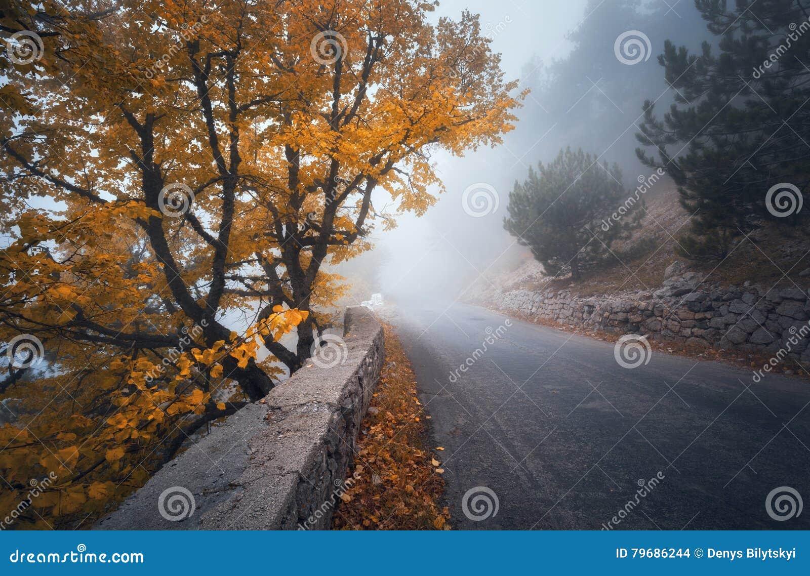 Floresta nevoenta do outono místico com estrada Madeiras enevoadas da queda