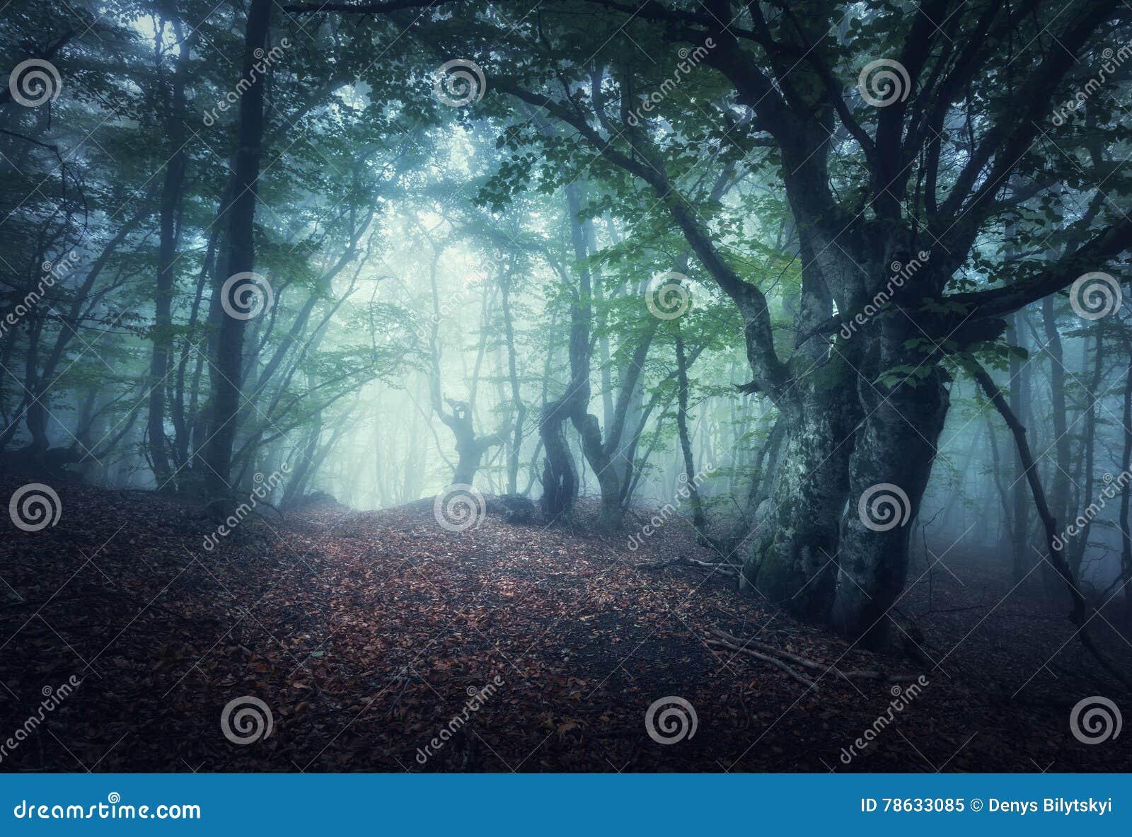 Floresta nevoenta do outono místico na manhã Árvores velhas
