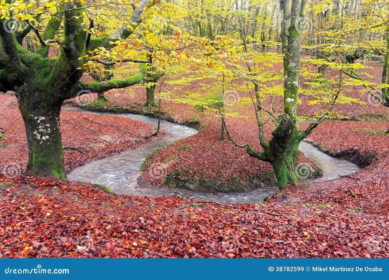 Floresta no outono com córrego