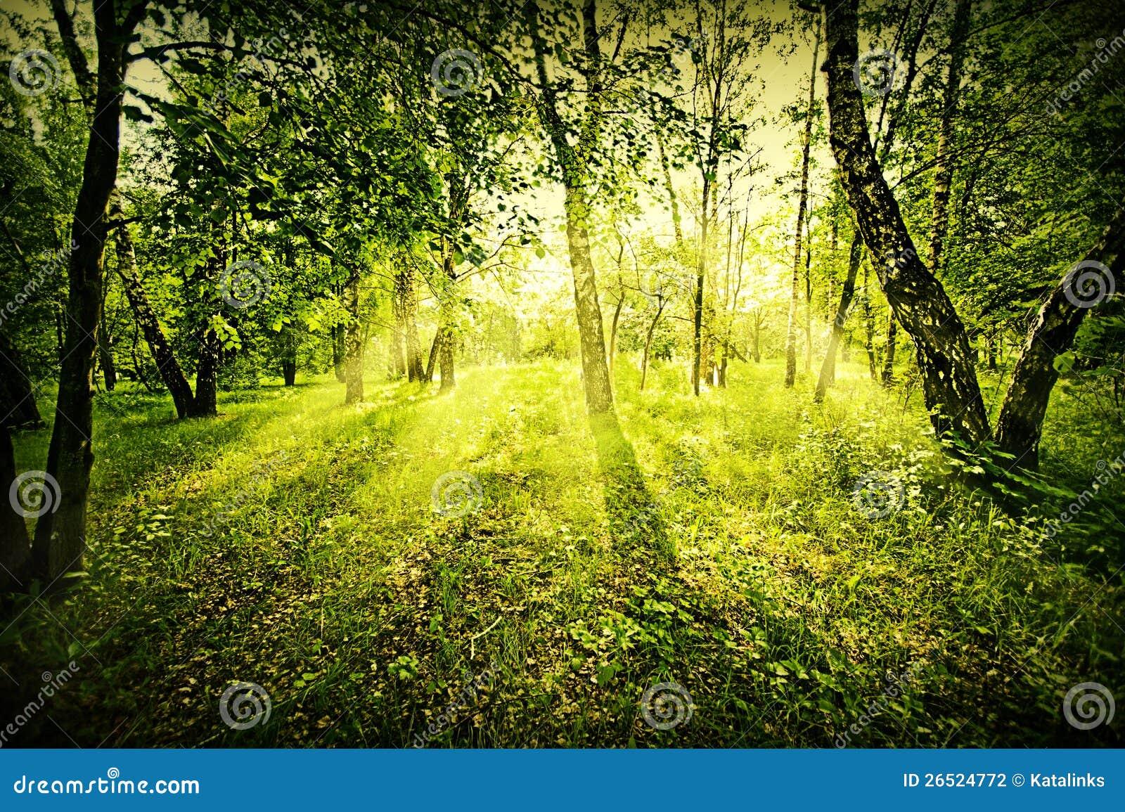 Floresta profunda da fantasia