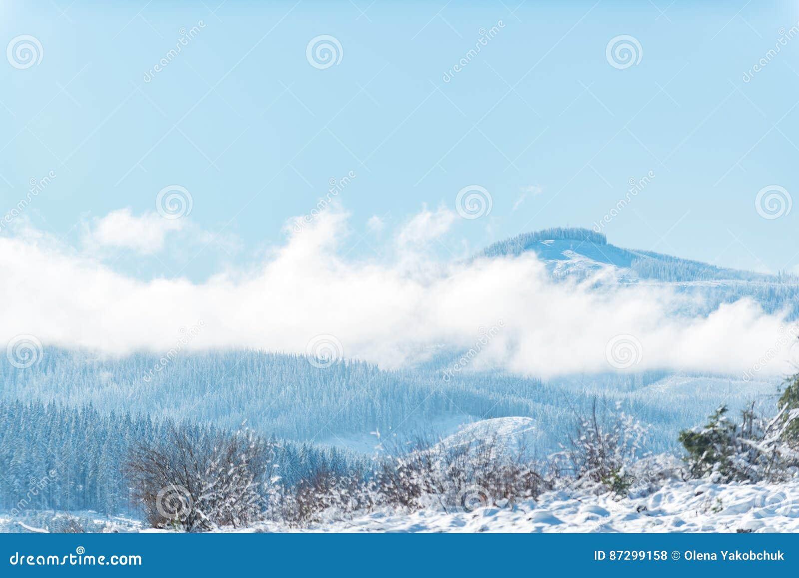Floresta que situa no pico da rocha