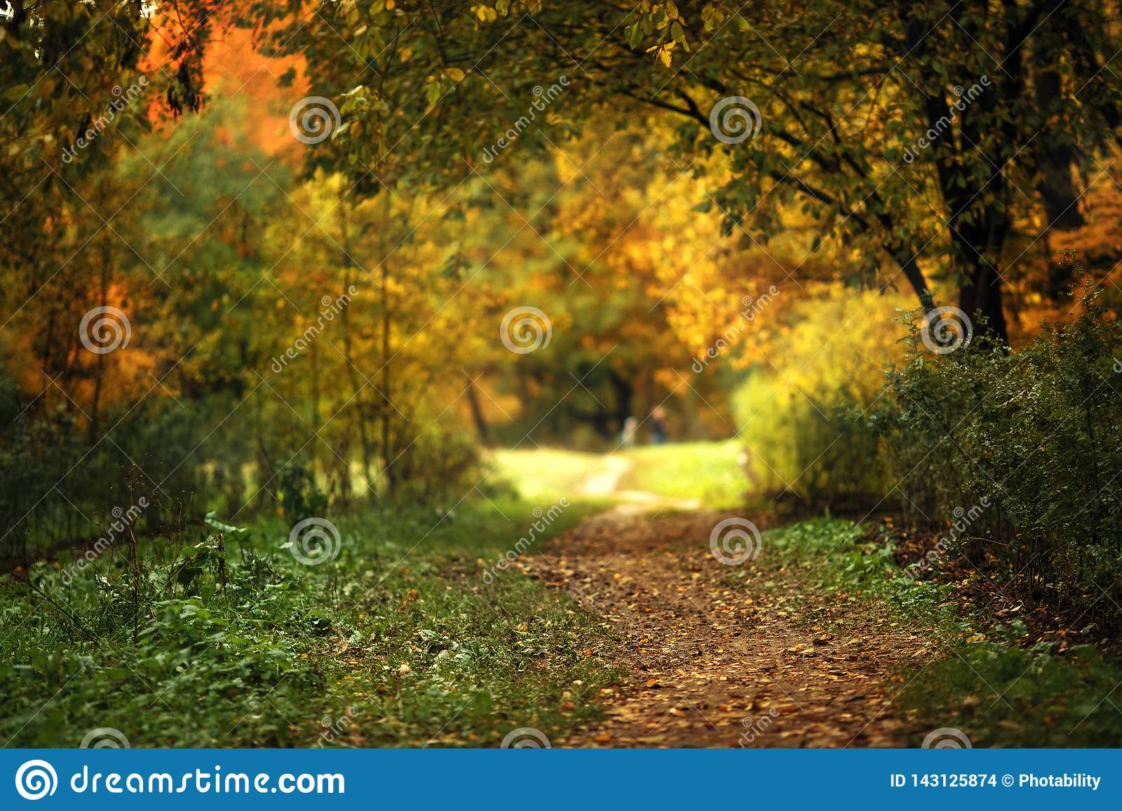Floresta quieta do outono