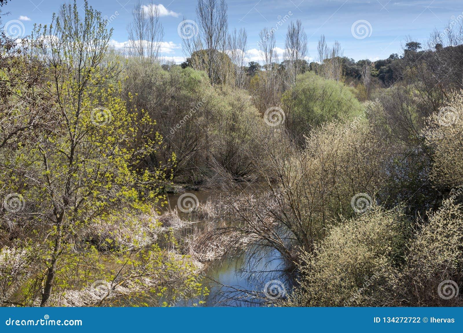 Floresta ribeirinho ao lado do rio Manzanares