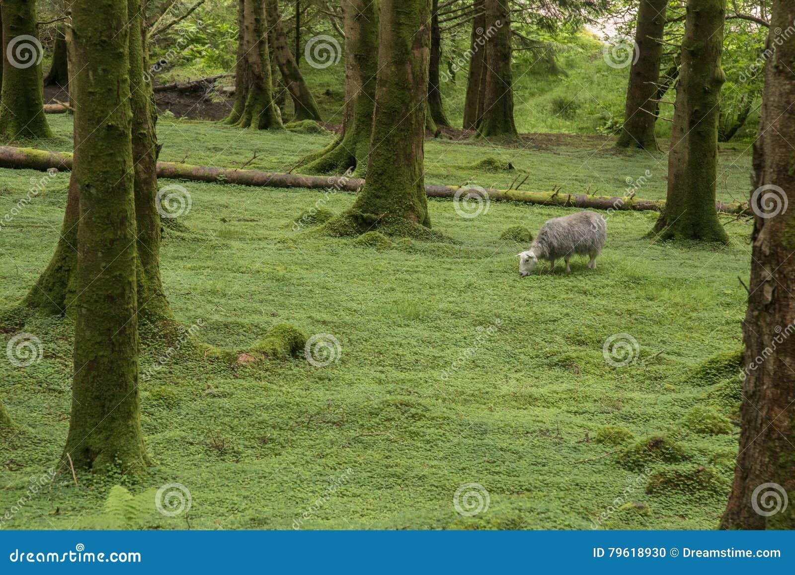 Floresta selvagem em Escócia