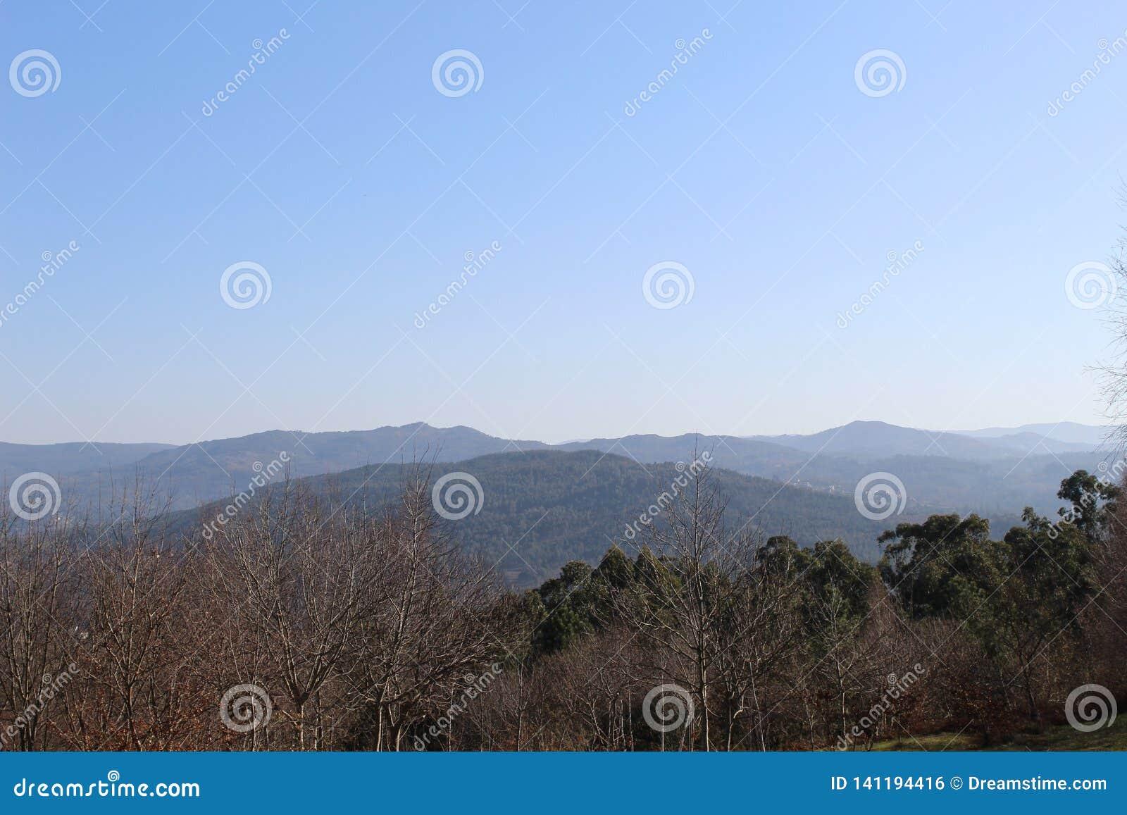 Floresta típica em Galiza