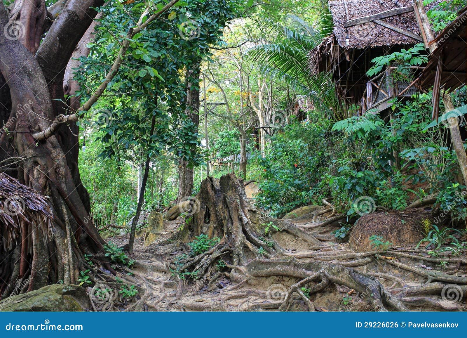 Download Floresta Tropical, Tailândia Foto de Stock - Imagem de tropical, tronco: 29226026