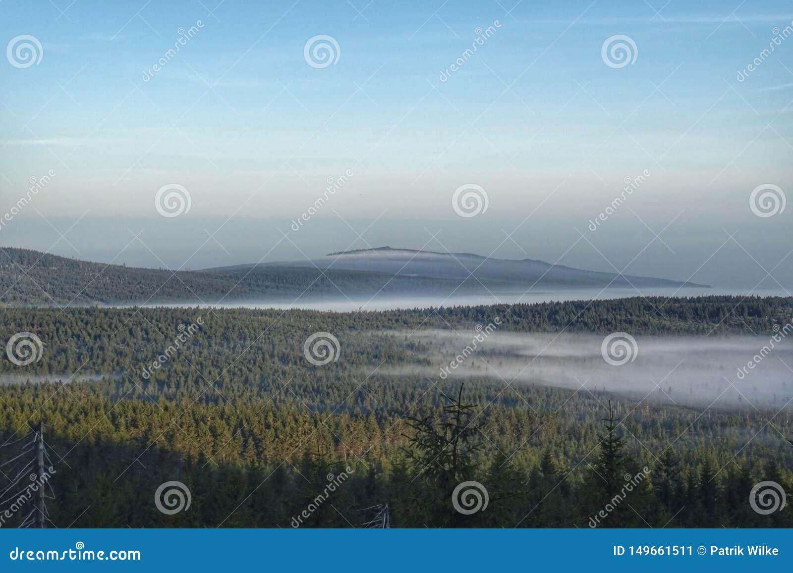 Florestas sob a n?voa da manh? nas montanhas europeias