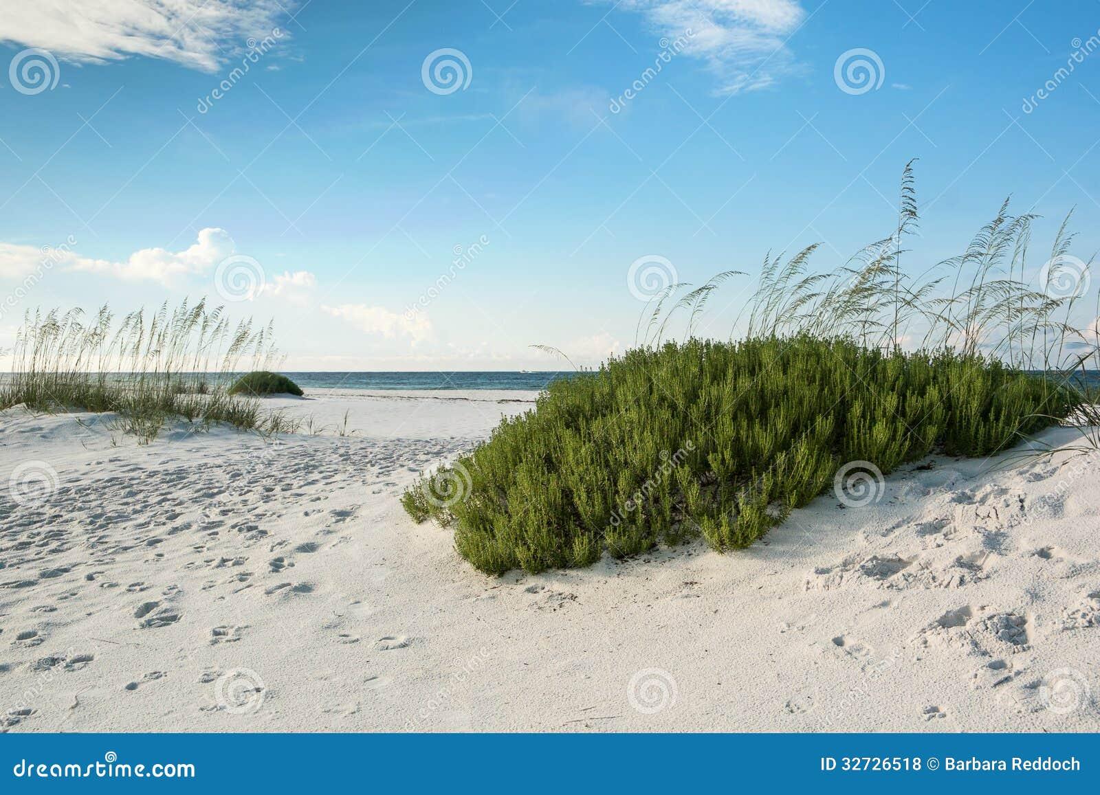 Florida Beach With Beach Rosemary Stock Photo Image