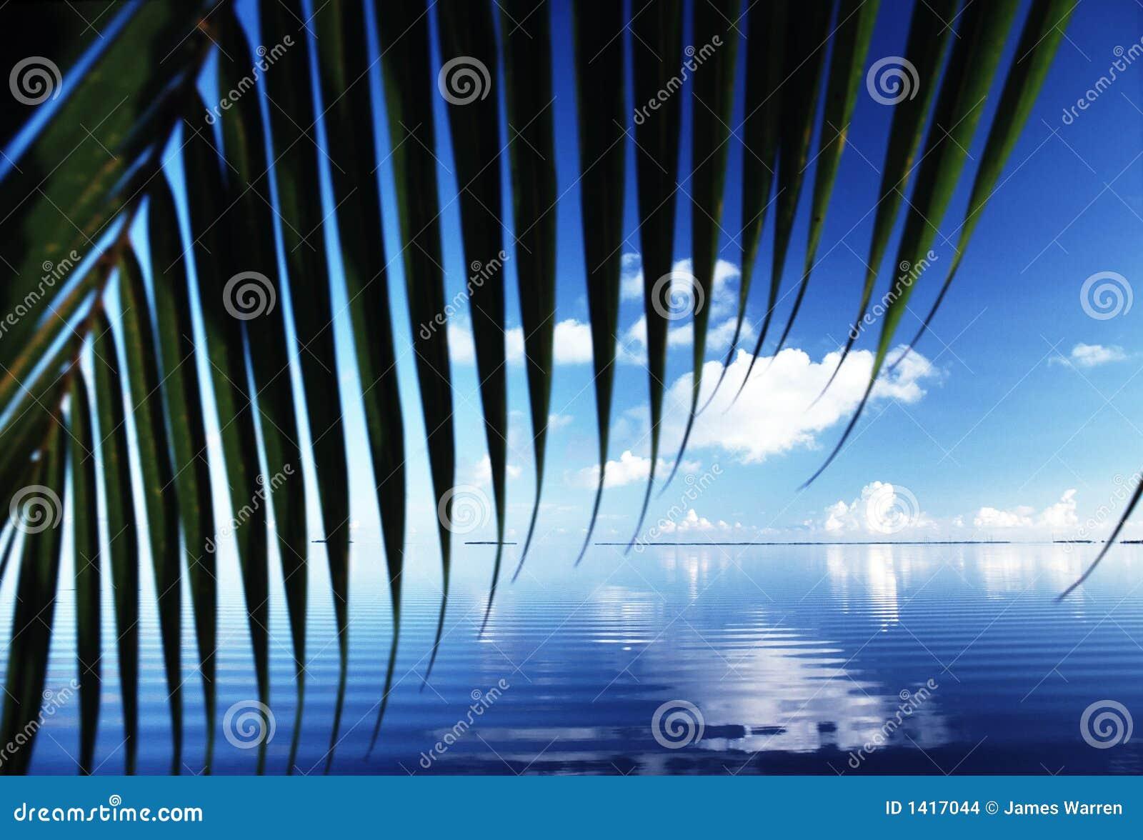 Florida-Reflexionen