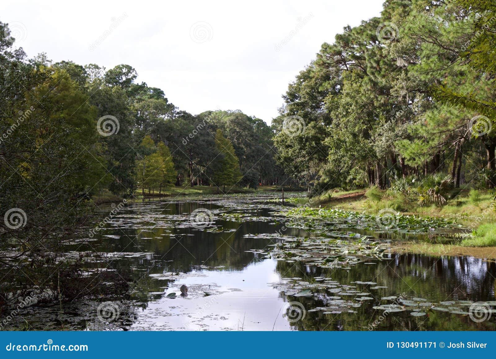 Florida sjö med träd runt om den