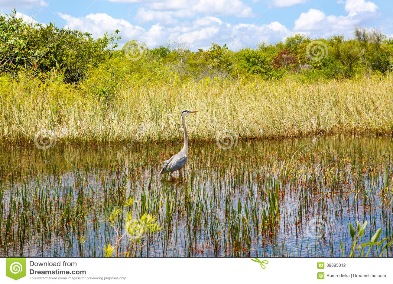 Florida-Sumpfgebiet, Airboatfahrt am Everglades-Nationalpark in USA