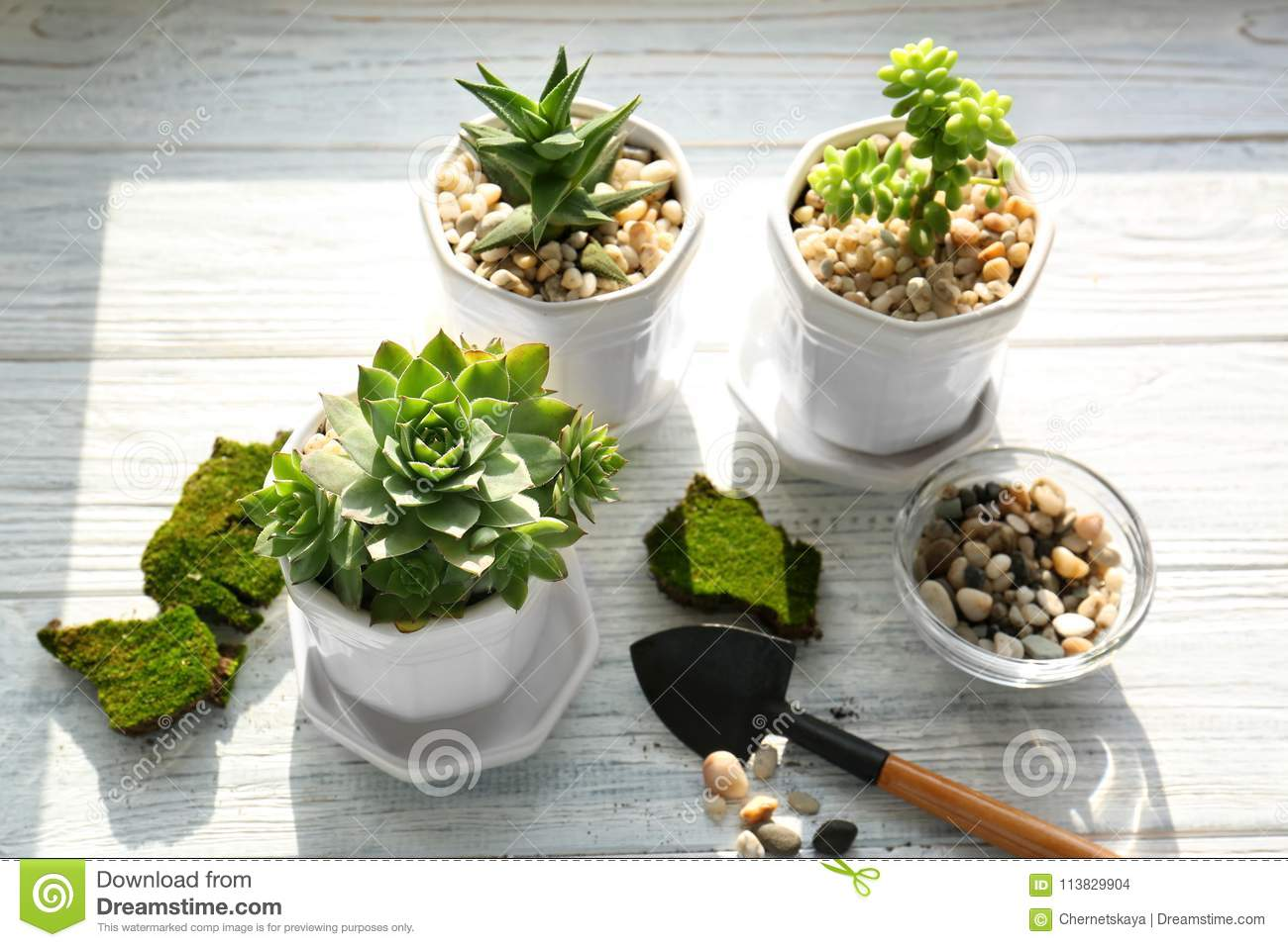 Florist Concept Replanting Beautiful Succulents Stock Photo Image Of Background Flora 113829904