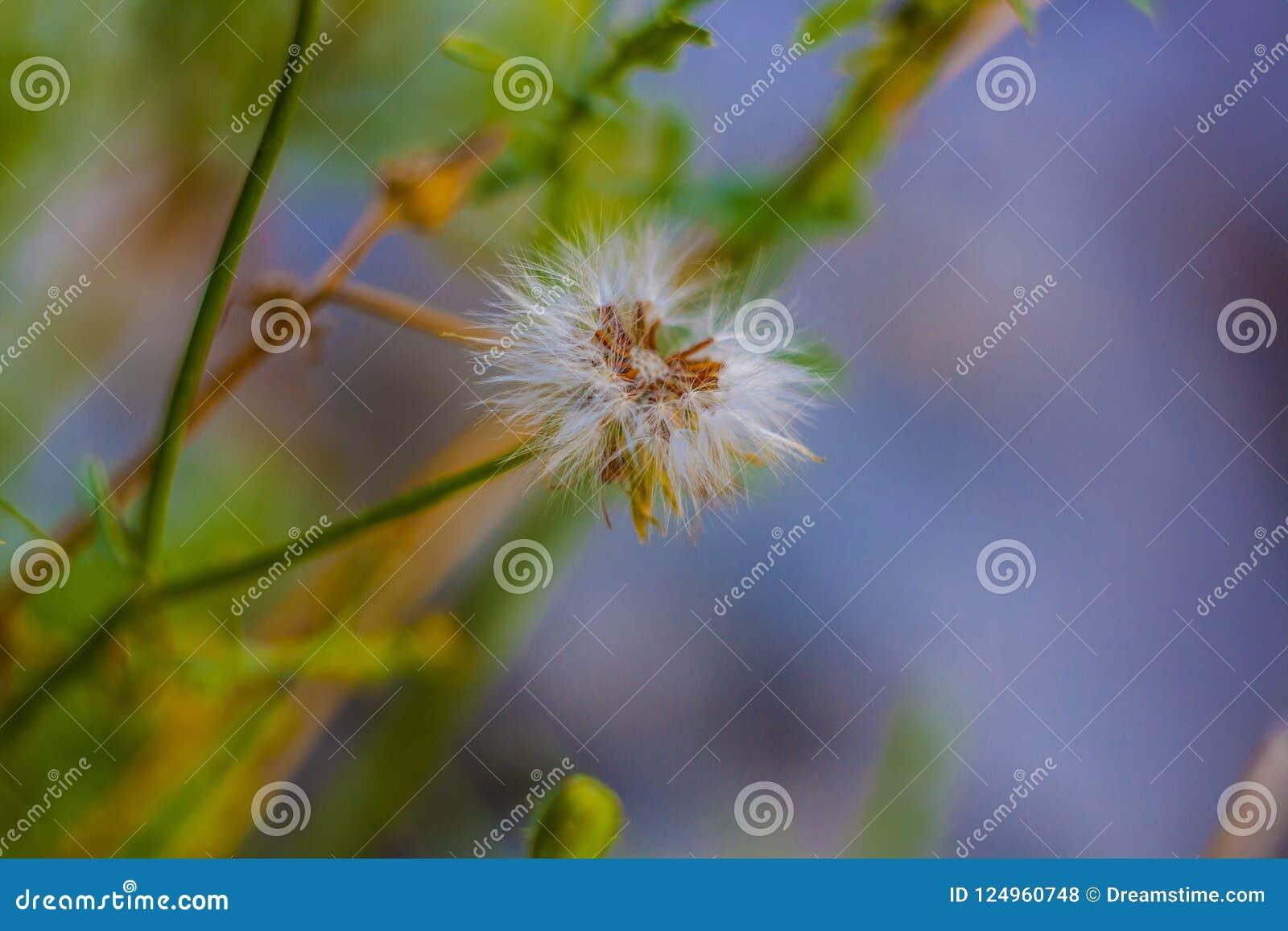 Flory della macchia mediterranea w Puglia