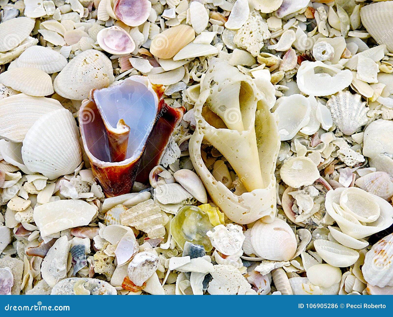 Floryda Miami plaża, widok seashells