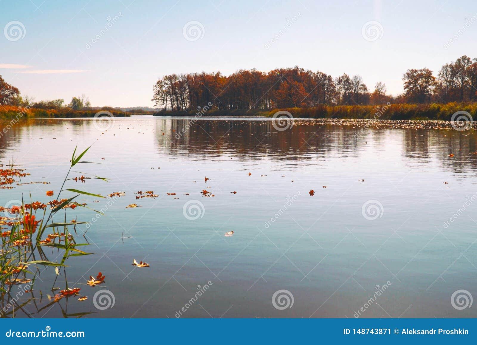 Flotador de las hojas de oto?o en el agua Lago o r?o con agua reservada en la estaci?n del oto?o