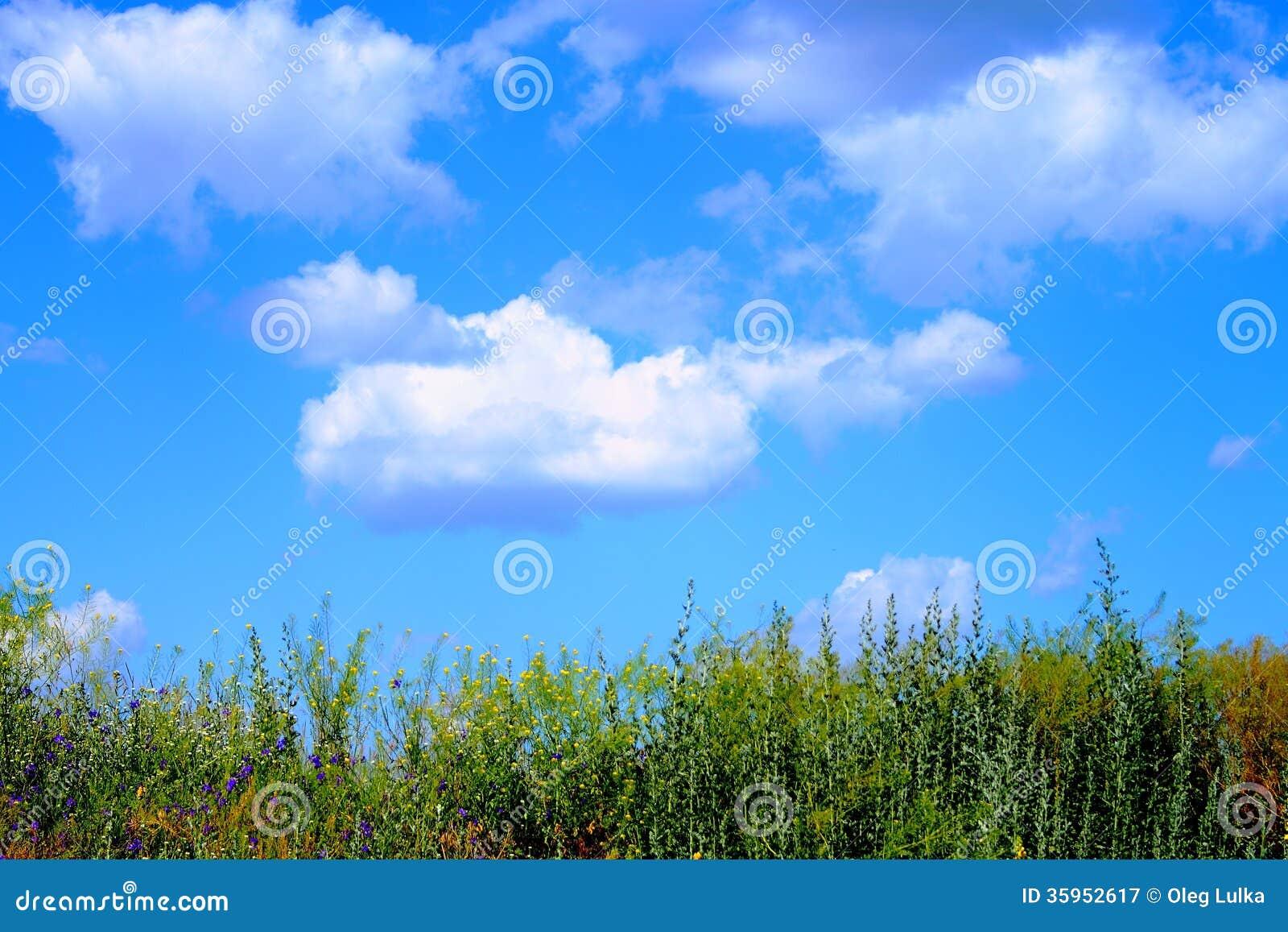 Flotador hermoso de las nubes sobre la hierba