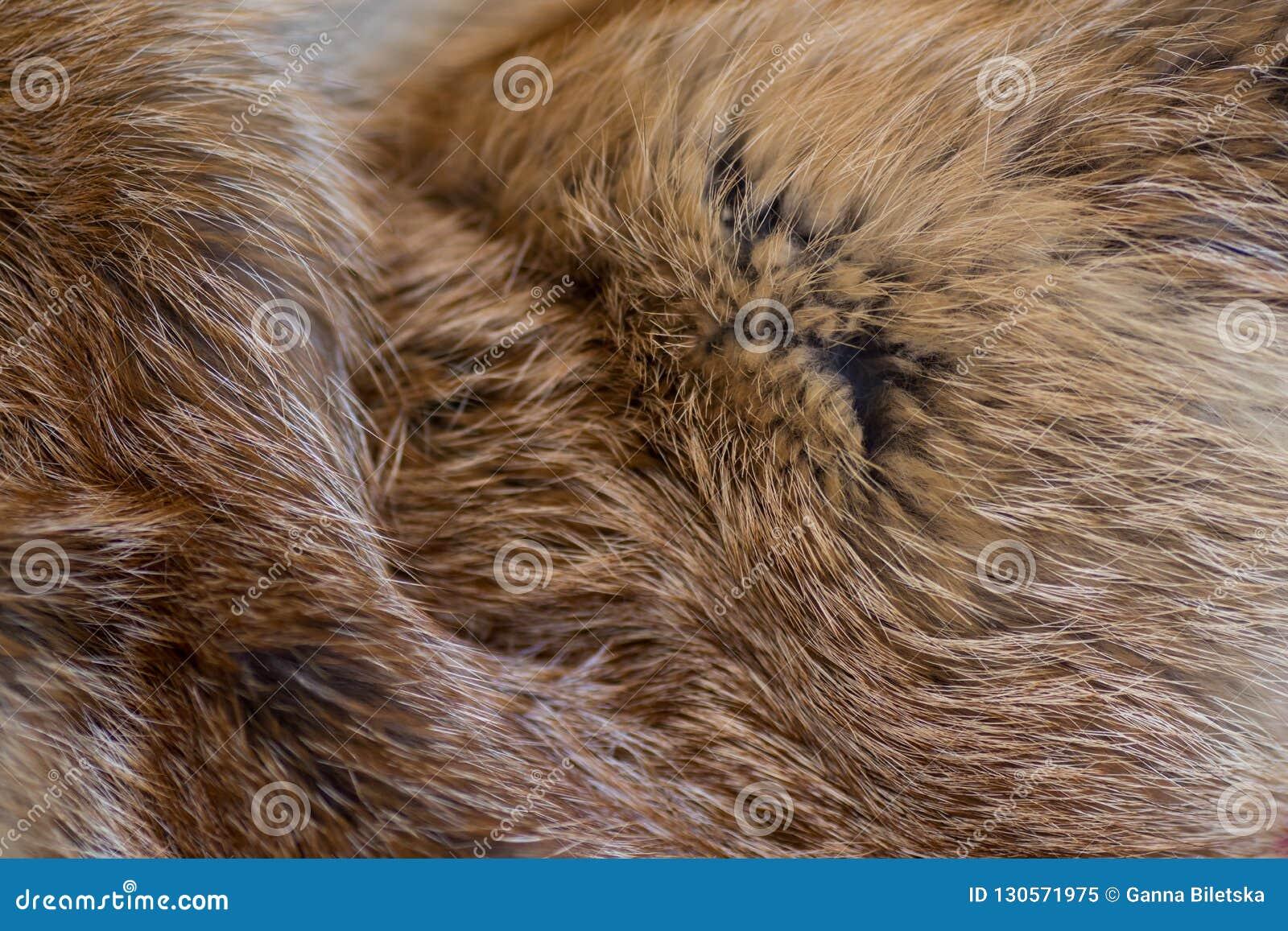 Flott och lyxig päls för röd räv