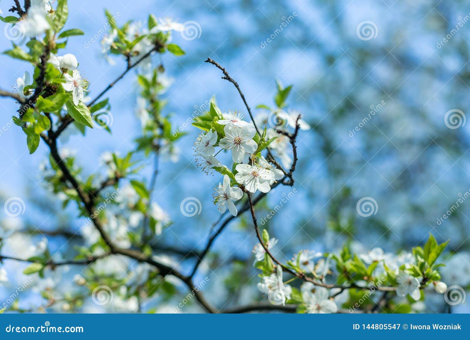 Flouers brancos de abril