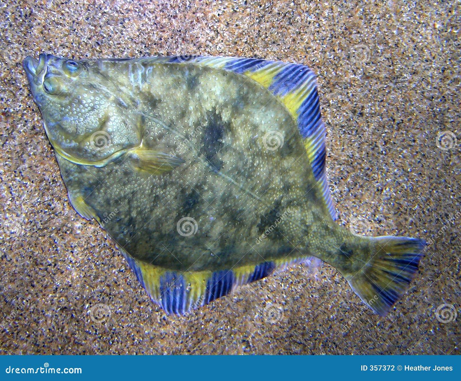 Flounder Fishing  SLAYING WITH BACON!!!