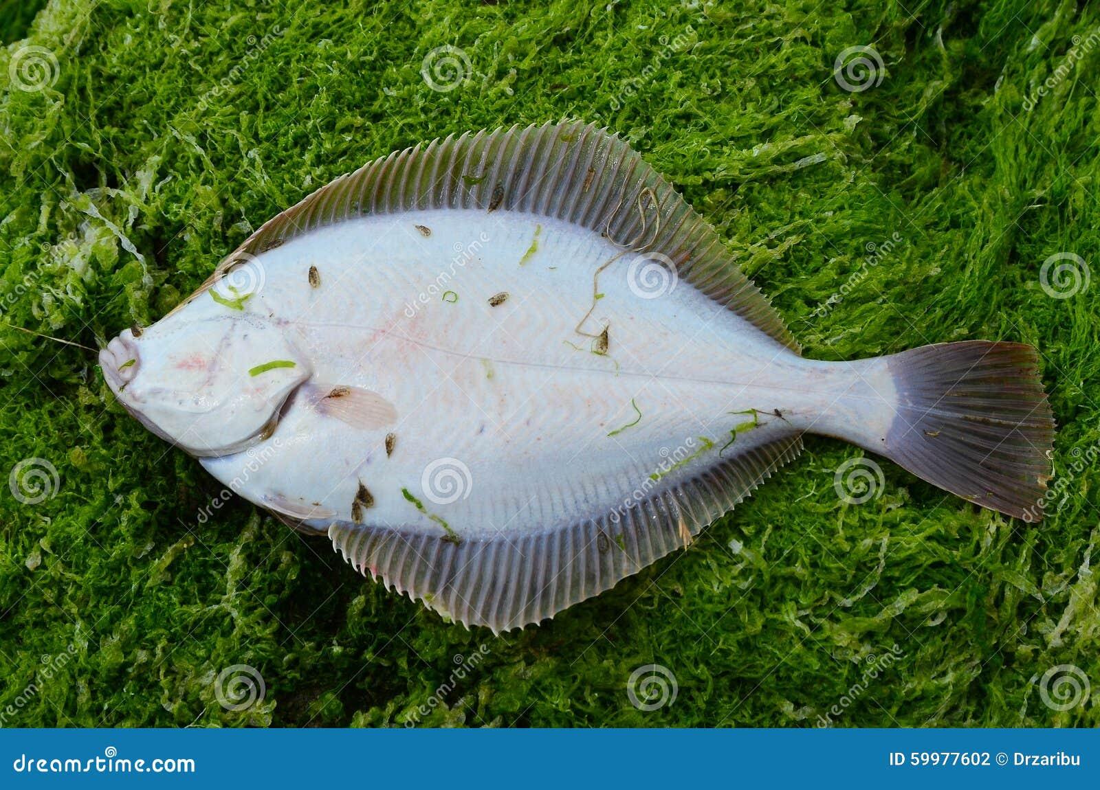 Savory Flounder
