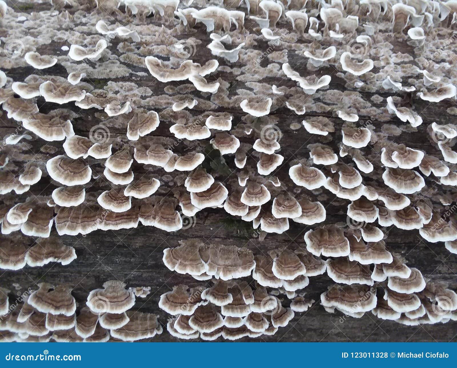 Flourishing fungus