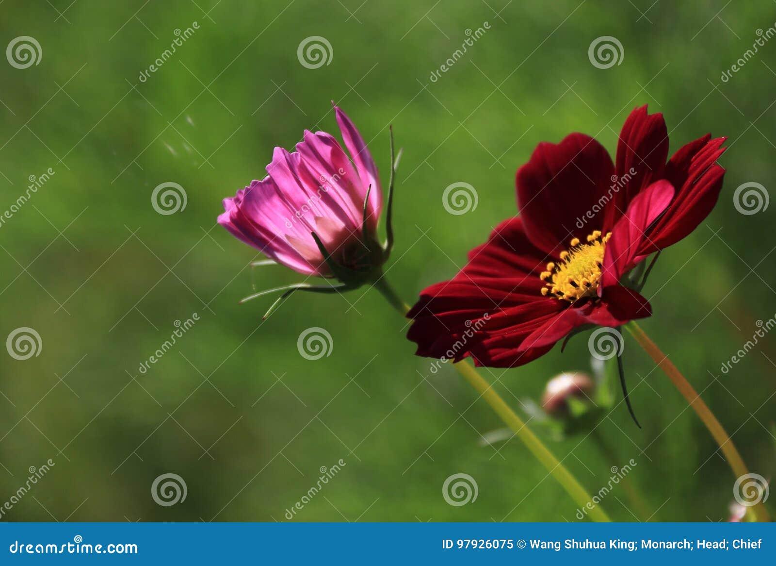 Flower Stock Image Image Of Garden Goodnn Beautiful 97926075