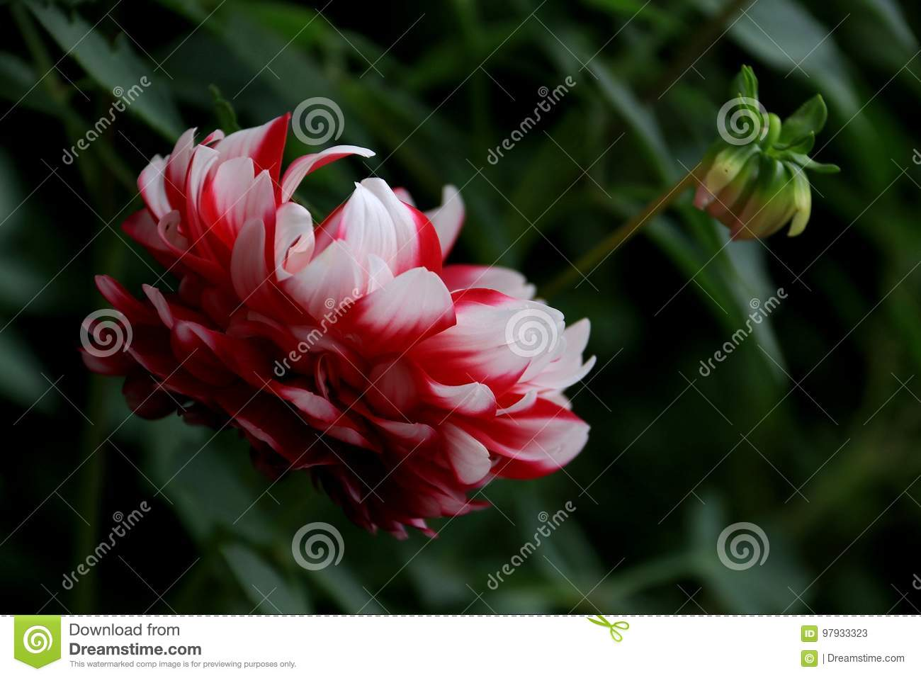Flower Stock Image Image Of Berry Familynn Delicious 97933323