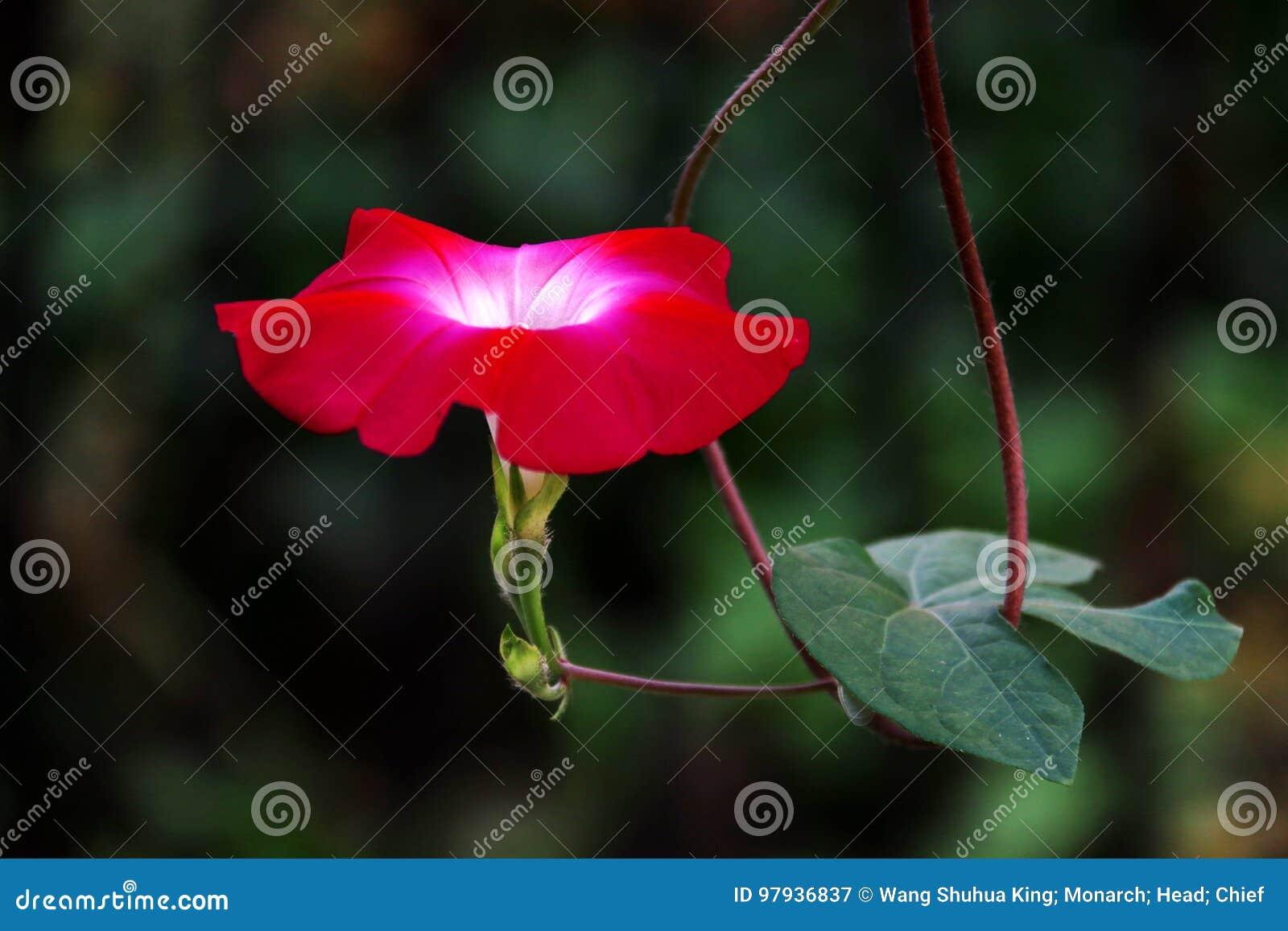 Flower Stock Image Image Of Flower Asia Floating Duckweed 97936837