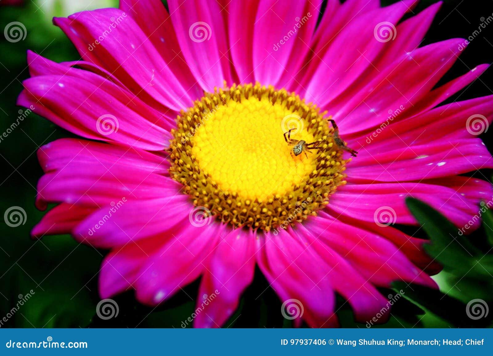 Flower Stock Photo Image Of Familynn Black Garden 97937406