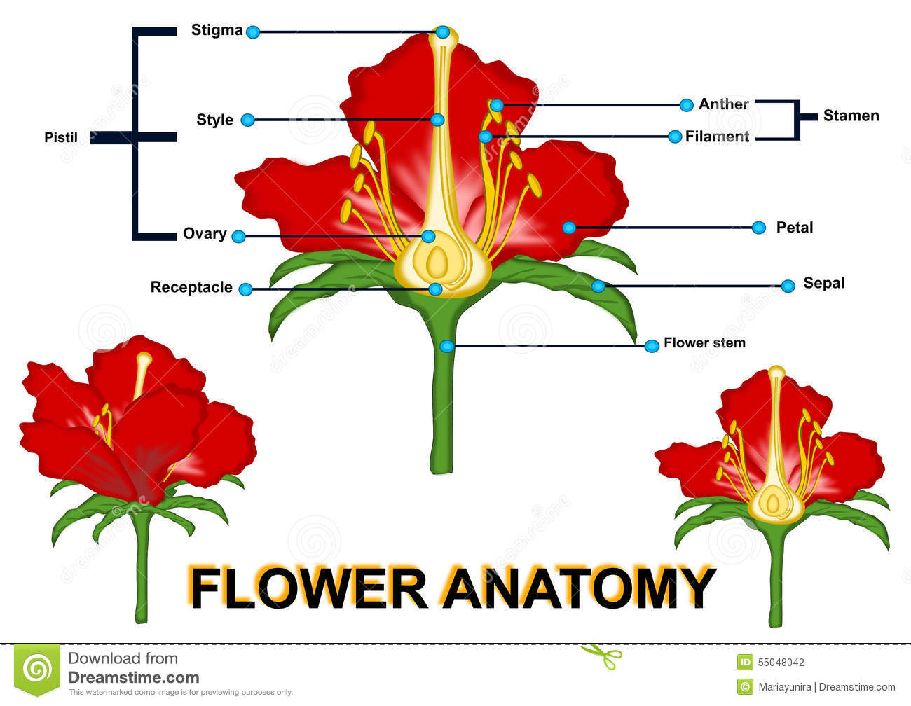 Parts of Flower isolated stock illustration. Illustration of flower ...