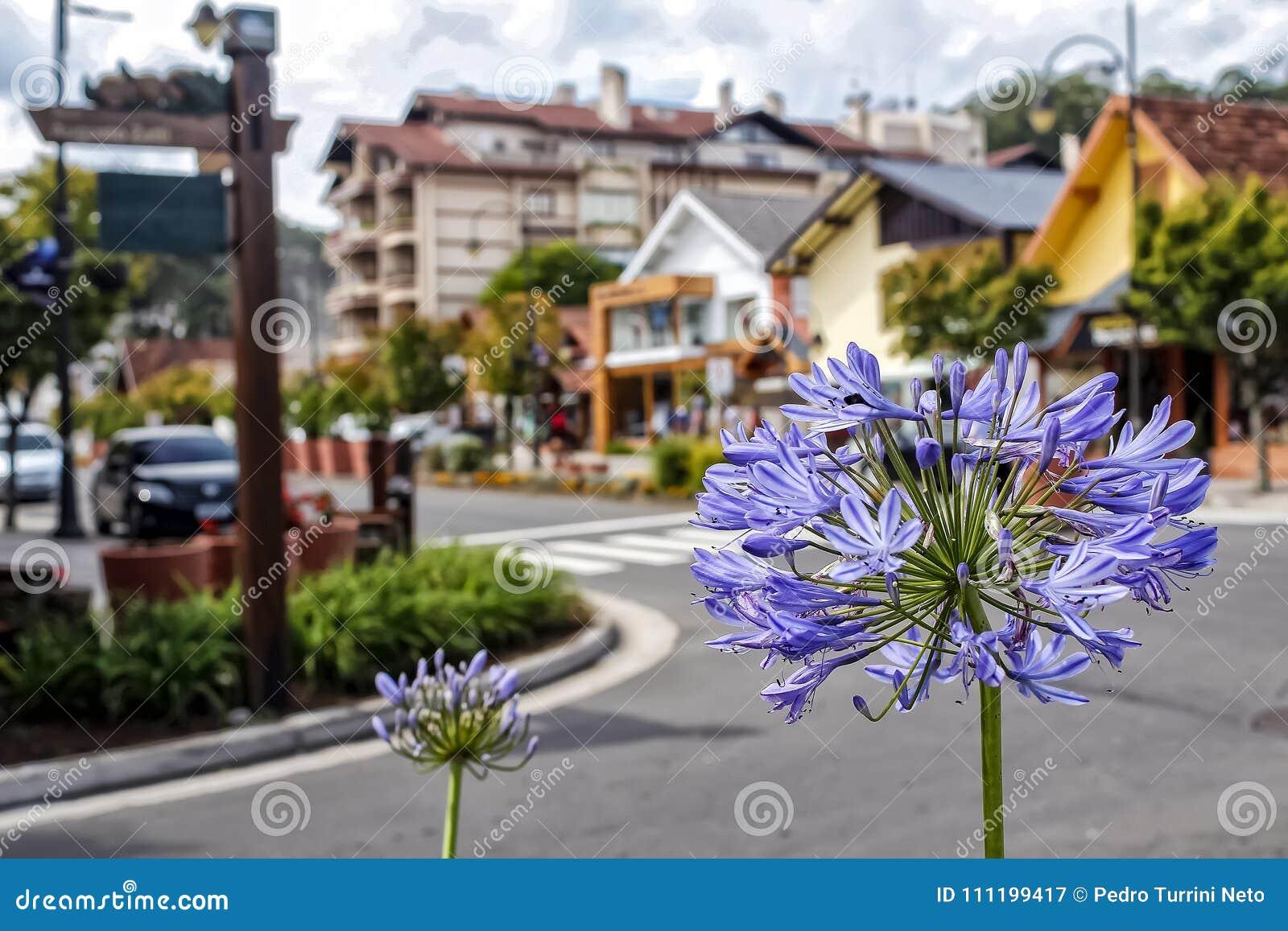 Flower on the Avenue Borges de Medeiros in Gramado, Rio Grande Do Sul, Brazil