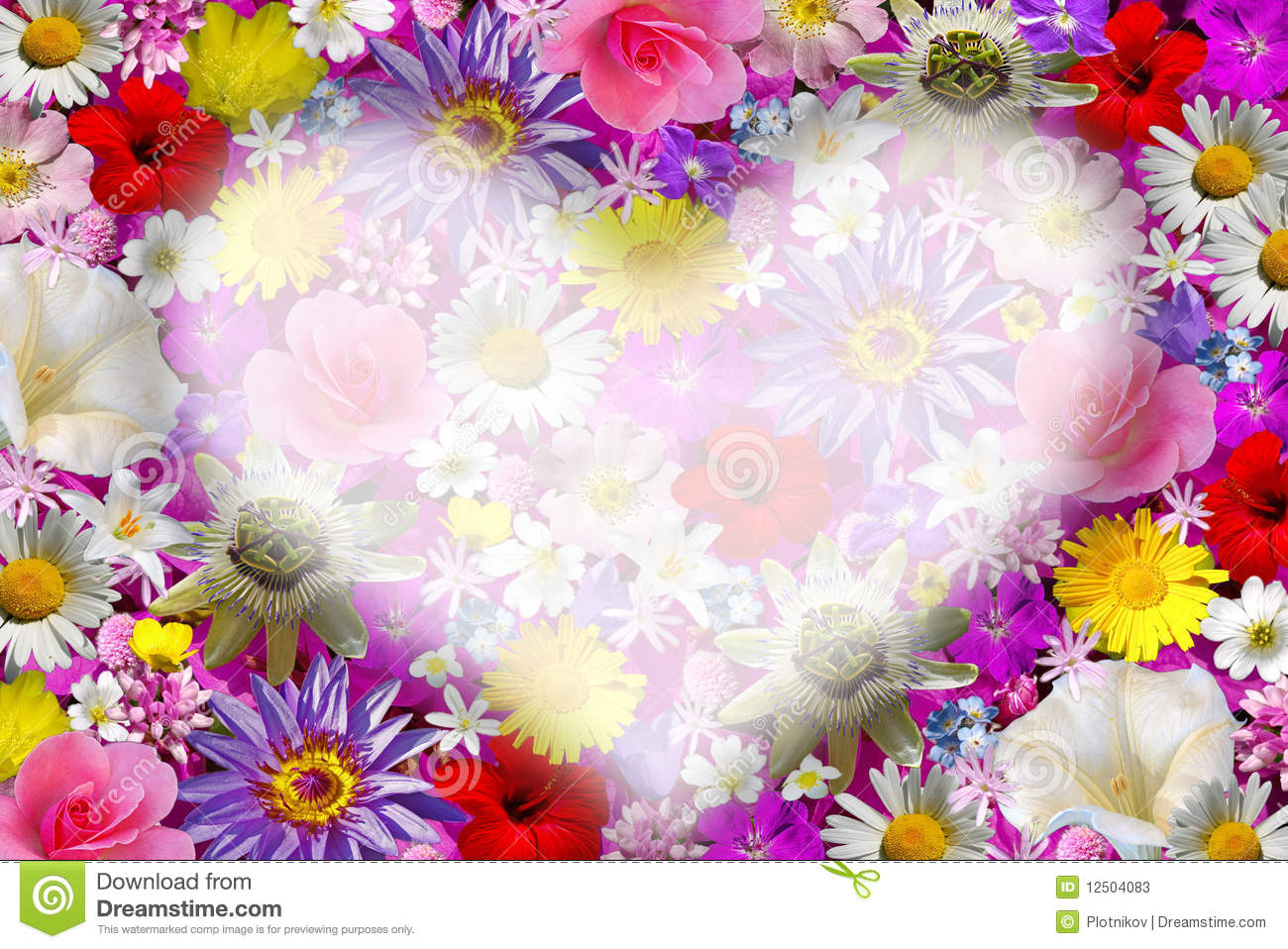 flower background with heart stock image image of nature blossom