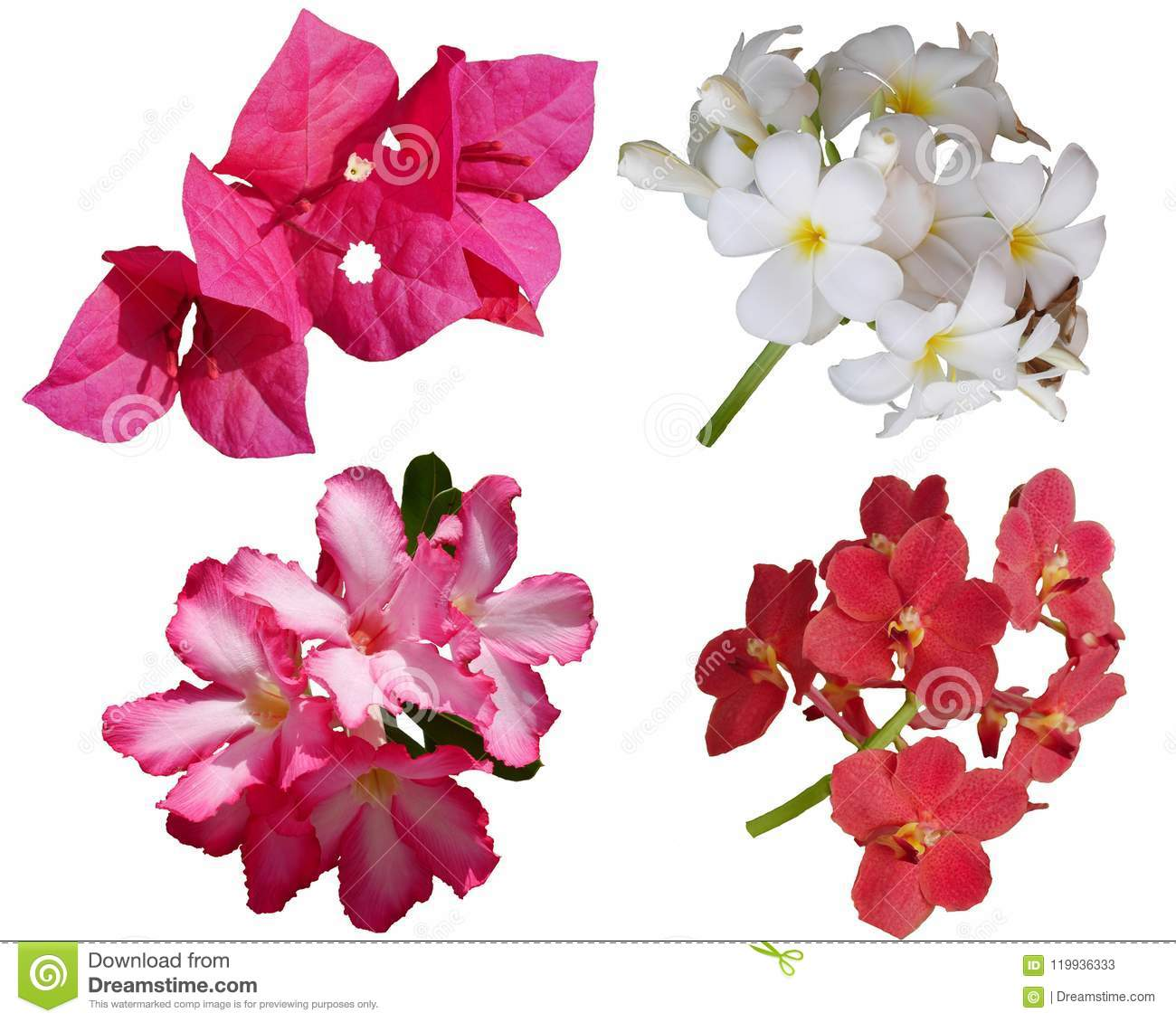 Flower Background Nature Red Beautifil Pink Color Stock Image