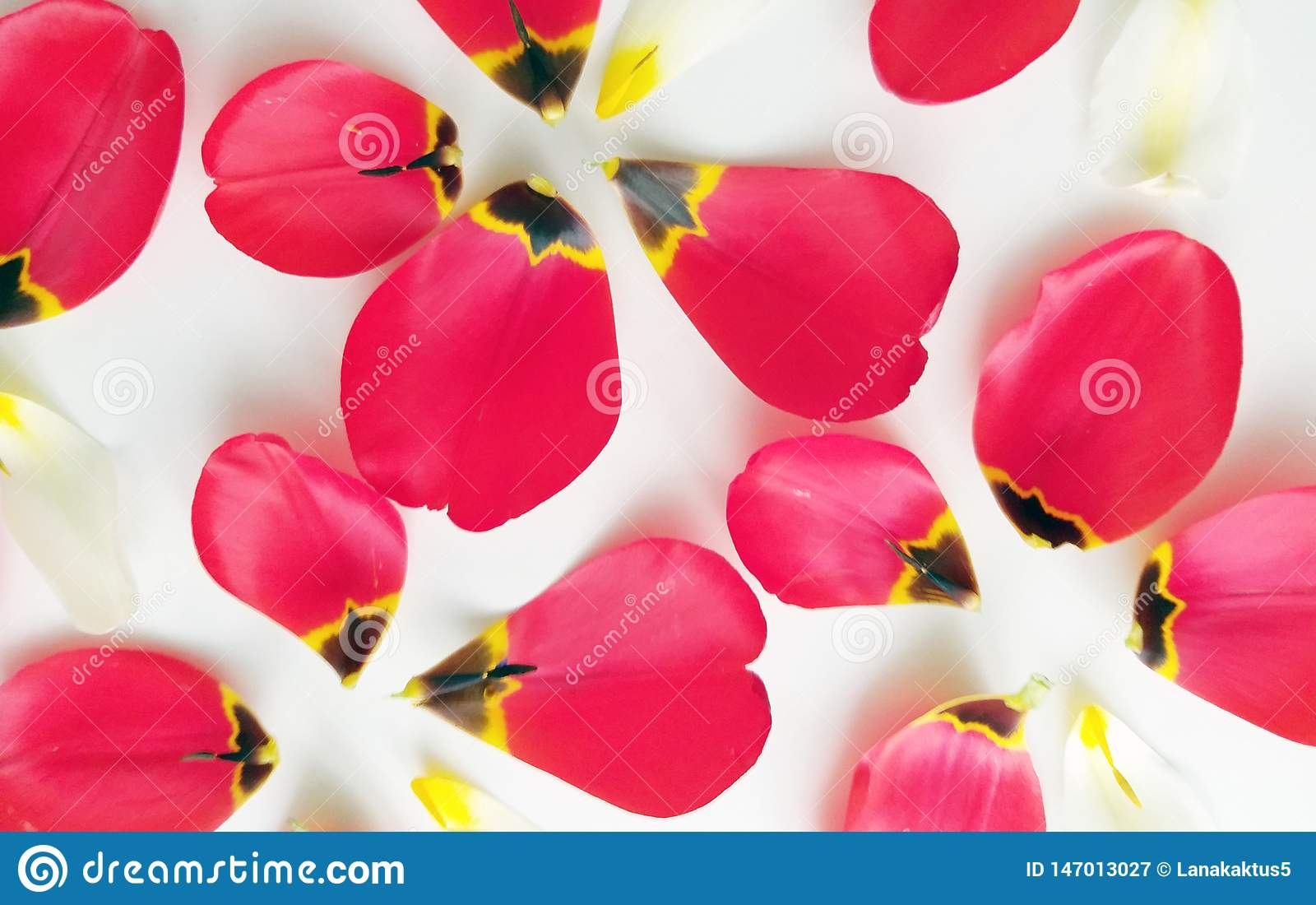 Flower background with petals of tulips