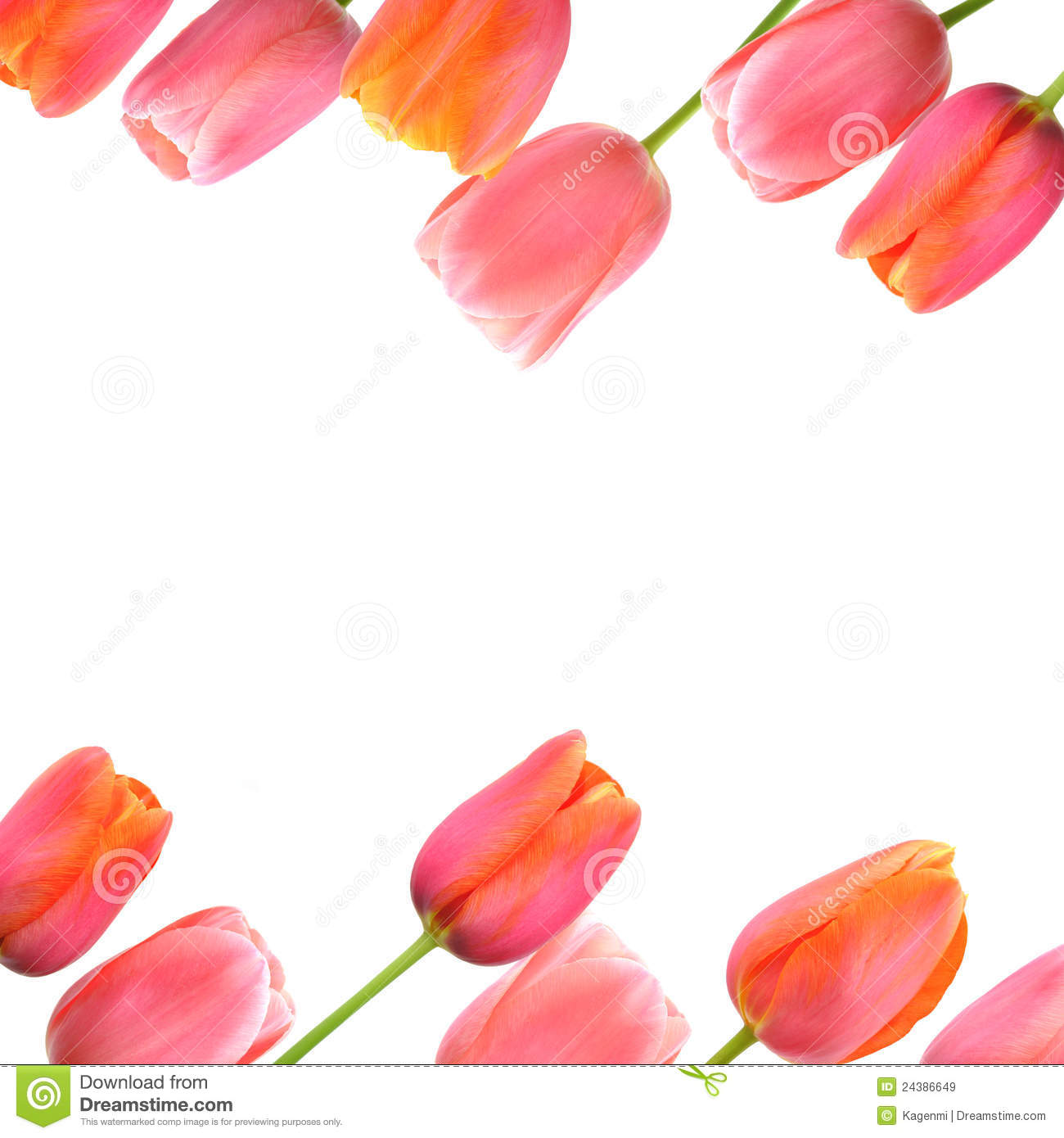 Flower Background With Pink Tulips Border Stock Image