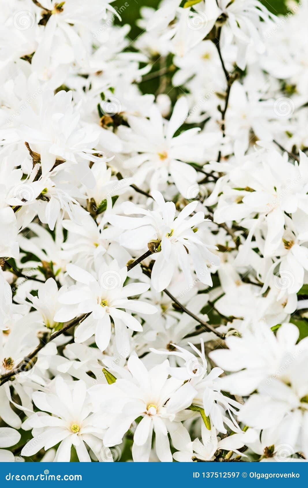 WHITE MAGNOLIAS FLOWERS IN FRAMES  Wallpaper Border Wall Decor DAISY