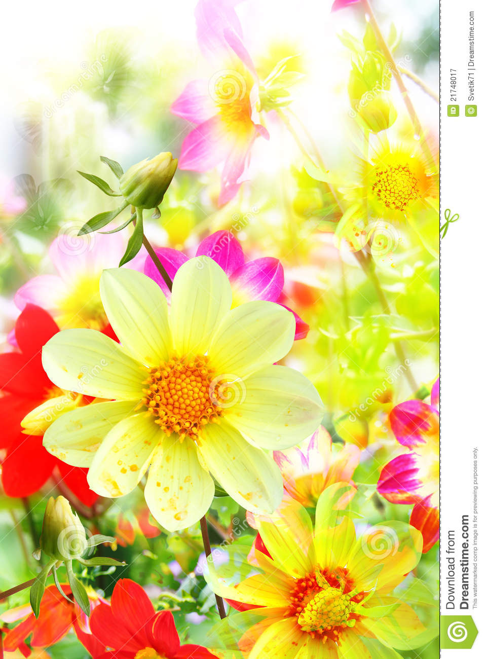 Flower Background From Yellow And Red Colors Stock Image Image Of
