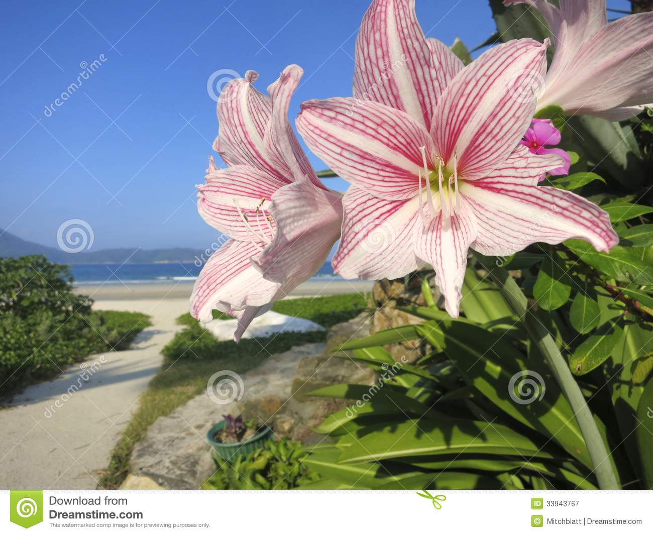 Flower beach beauty white and pink flowers close up in beach download comp izmirmasajfo