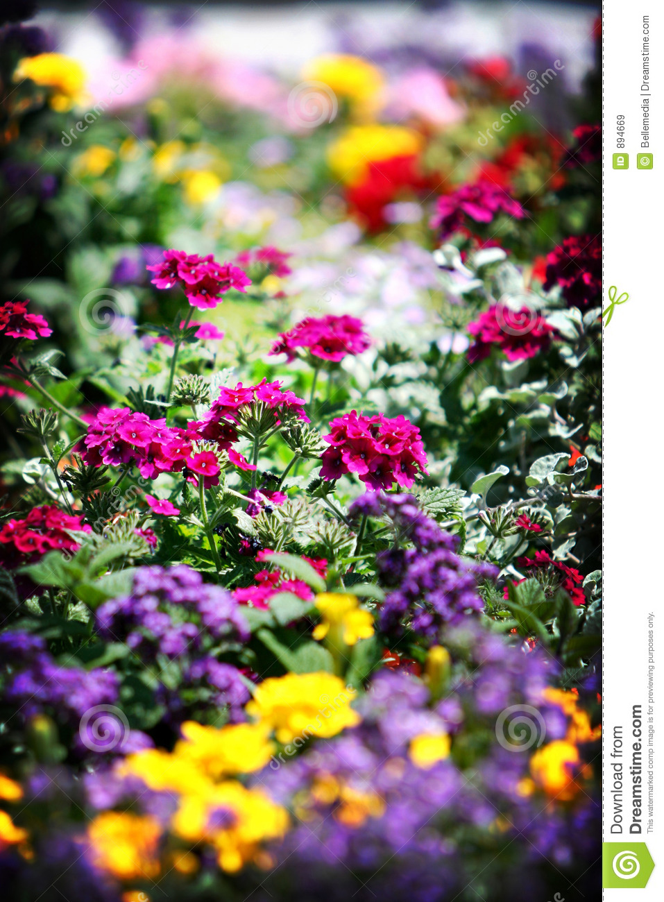 Flower Bed Stock Image Image Of Spring Scenic Field 894669