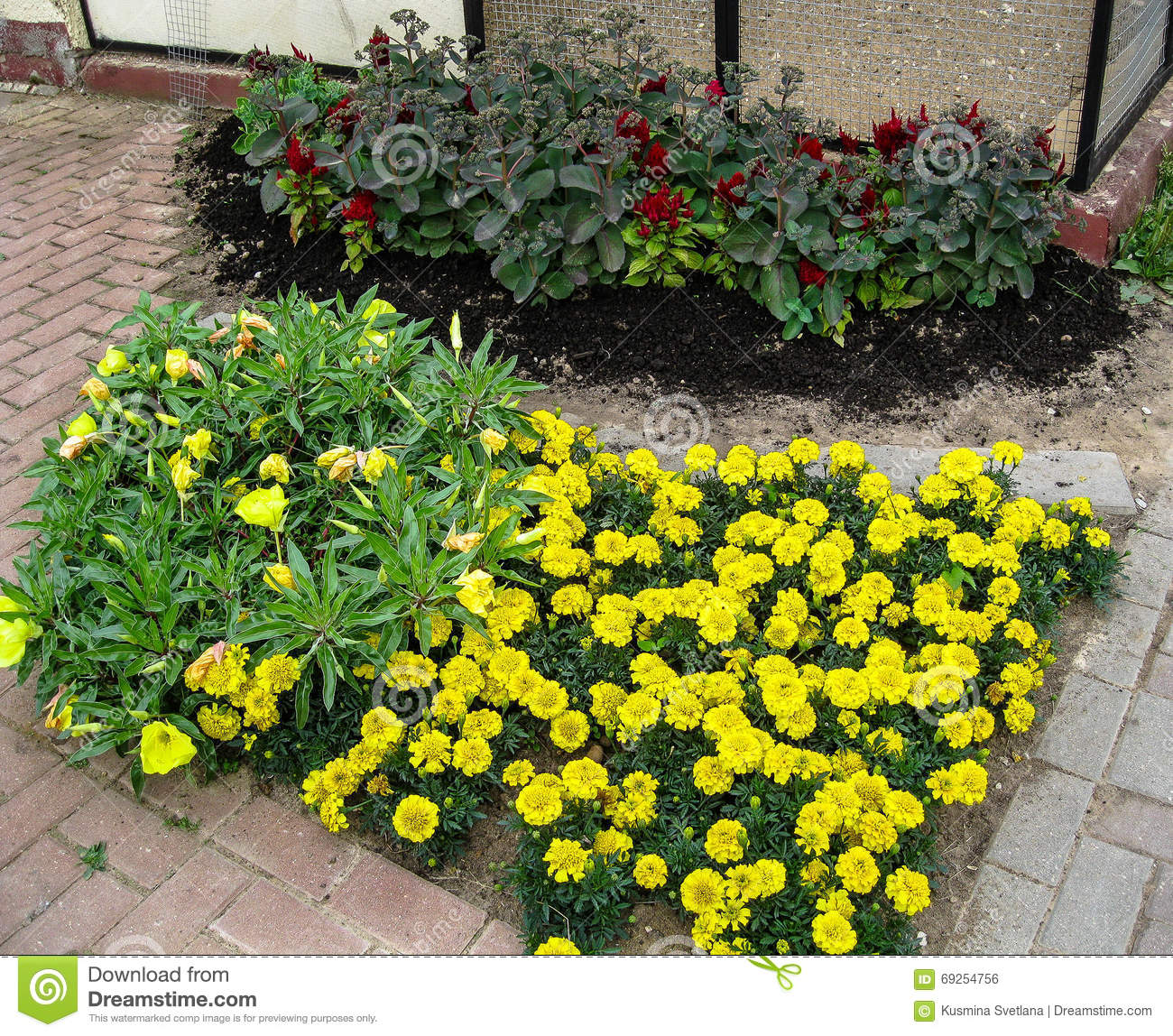 A flower bed in the garden stock photo image 69254756 for Ornamental trees for flower beds