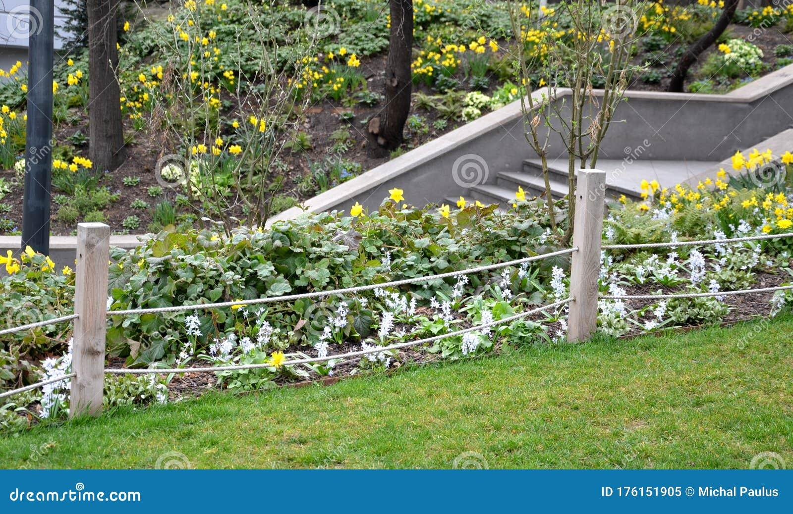 Flower Bed Narcissus Pseudonarcissus Granit Green Dark Trunks Gray