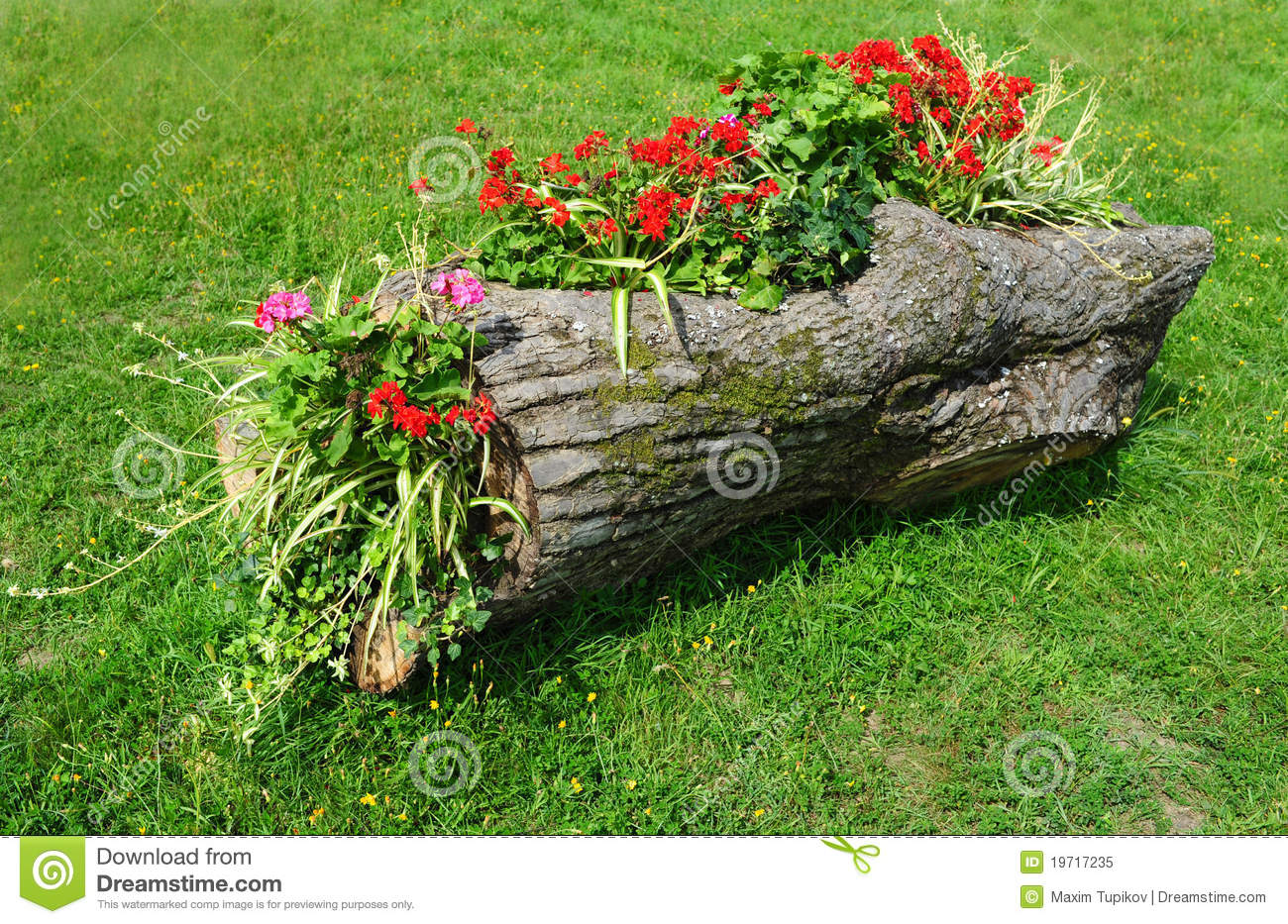 flower bed in a wooden log of formal garden royalty free