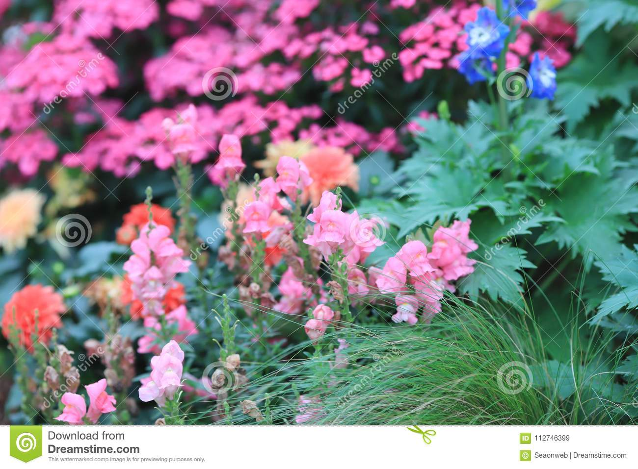 A Flower Beds In Formal Garden At Outdoor Stock Image Image Of
